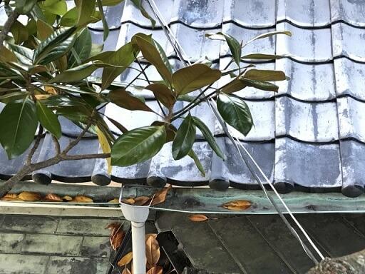 雨樋と落ち葉